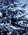 Sirius Lichternetz Tech-Line 168 LED warmweiß 230V 1,7 x 1,4m schwarz - Thumbnail 1