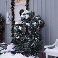 Sirius Lichternetz David 200 LED warmweiß außen 2 x 2m grün - Thumbnail 1