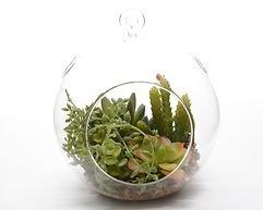 Kaemingk Glaskugel für Sukkulenten 15,5 x 17cm