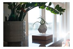 Flyte Blumentopf Lyfe Silikon Eichenholz