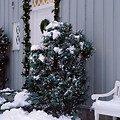 Sirius Lichternetz David 100 LED warmweiß außen 1 x 1m grün - Thumbnail 1